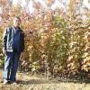山东美国红枫扦插——山东哪家美国红枫供应商好