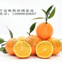 眉山柑橘脐橙批发代办|金色果地供