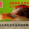 蜗牛养殖的成本有多少【江苏大泽生态农业科技】技术支持