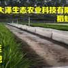 人工青蛙养殖技术哪里有 【江苏大泽生态科技】免费培训