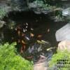 常州优良的鱼池过滤器出售_海淀鱼池水处理技术
