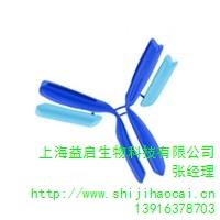 上海IGG抗体供应 益启供