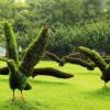 动物绿雕哪家有|专业的动物绿雕制作