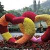 江苏创新型的创意绿雕|特色的创意绿雕供应