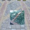 深圳市安良花苗水泥四孔多孔砖生产送货树池压土水泥网格砖同城厂