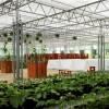 温室工程 温室建设 温室大棚日光温室 智能温室--佰辰公司