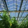 花卉 蔬菜 生态餐厅 科研 休闲 智能温室价格 厂家设计建设
