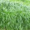 牧草种子批发市场,内蒙古多年生牧草种子