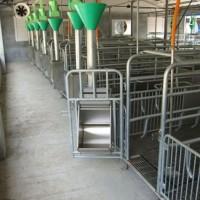 新疆自动化料线生产制造/沧州万晟畜牧设备品质保障