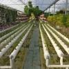 薄膜温室大棚 智能温室 阳光板温室大棚 生态餐厅--佰辰温室