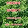 周全农业专业供应苜蓿除草剂,裕华蓿草清