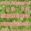 牧草种子,供应专业的金秋葵