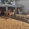 临沂不错的梅花鹿提供商-菏泽哪里有梅花鹿养殖基地