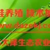 江苏青蛙养殖免费培训基地,稻蛙共养技术【江苏大泽科技】
