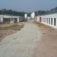 桂林自动化喂猪设备厂家供货/开元畜牧发货快速免费指导安装调试
