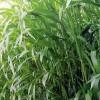 牧草种子品质介绍推荐 宁夏上谷农牧业好口碑种子公司