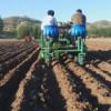 蔬菜栽苗机厂家-好用的栽植机供应信息
