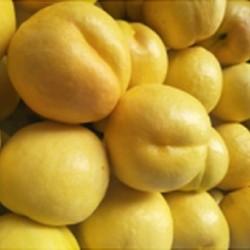 黄珊瑚油桃|哪里有供应-黄珊瑚油桃