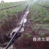 漯河喷灌带-价格优惠的喷灌带石家庄哪里有