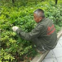 供应-上海青浦区-厂房绿化养护-多少钱-泽珐供