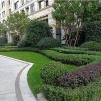 销售-上海青浦区-花园绿化养护-多少钱-泽珐供