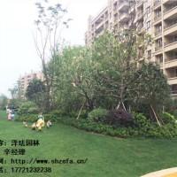 供应-上海嘉定区-绿化养护-采购-厂家-泽珐供
