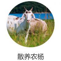 合肥地区智慧畜牧管理传统畜牧养殖智能化升级解决方案