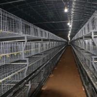 鸡笼框架肉鸡笼养设备养鸡笼养鸡设备蛋鸡笼养设备