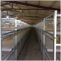 养鸡场养鸡用肉鸡笼立式鸡笼层叠鸡笼鸡笼厂家山东金石农牧机械